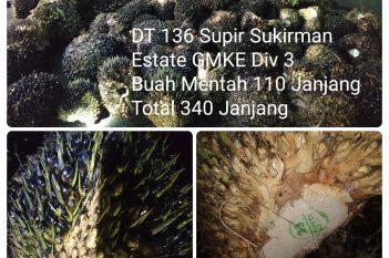 GMKE Divisi 3 TBS Mentah 110 Janjang