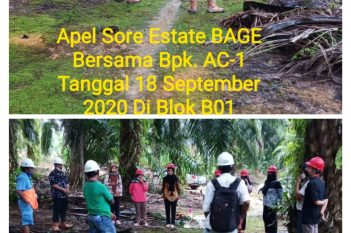 Apel Sore Estate BAGE