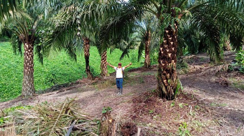 Penyelamatan Pokok di BHJE yang terlupakan