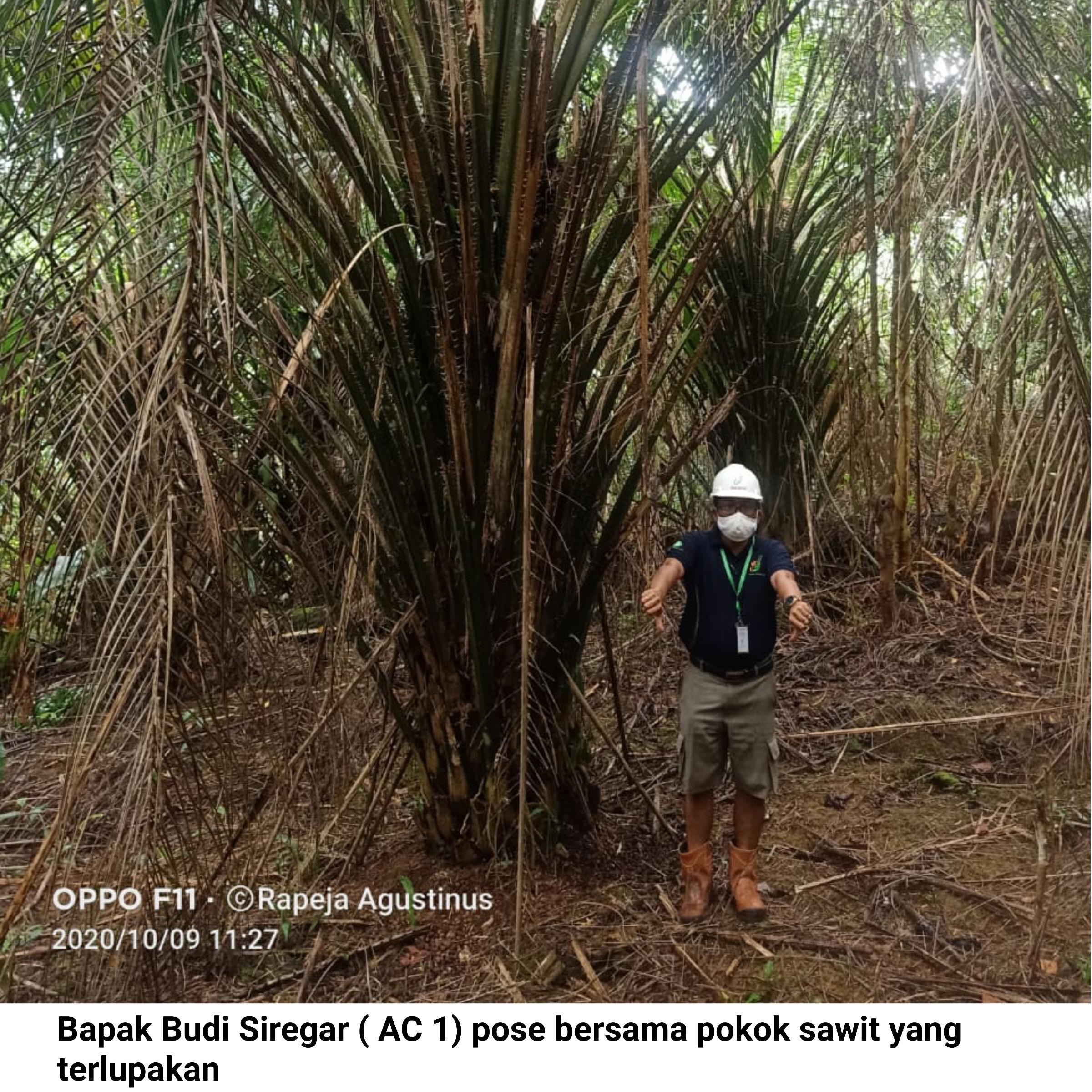 Area Controller 1 Berpose di Pokok Kelapa Sawit yang terlupakan