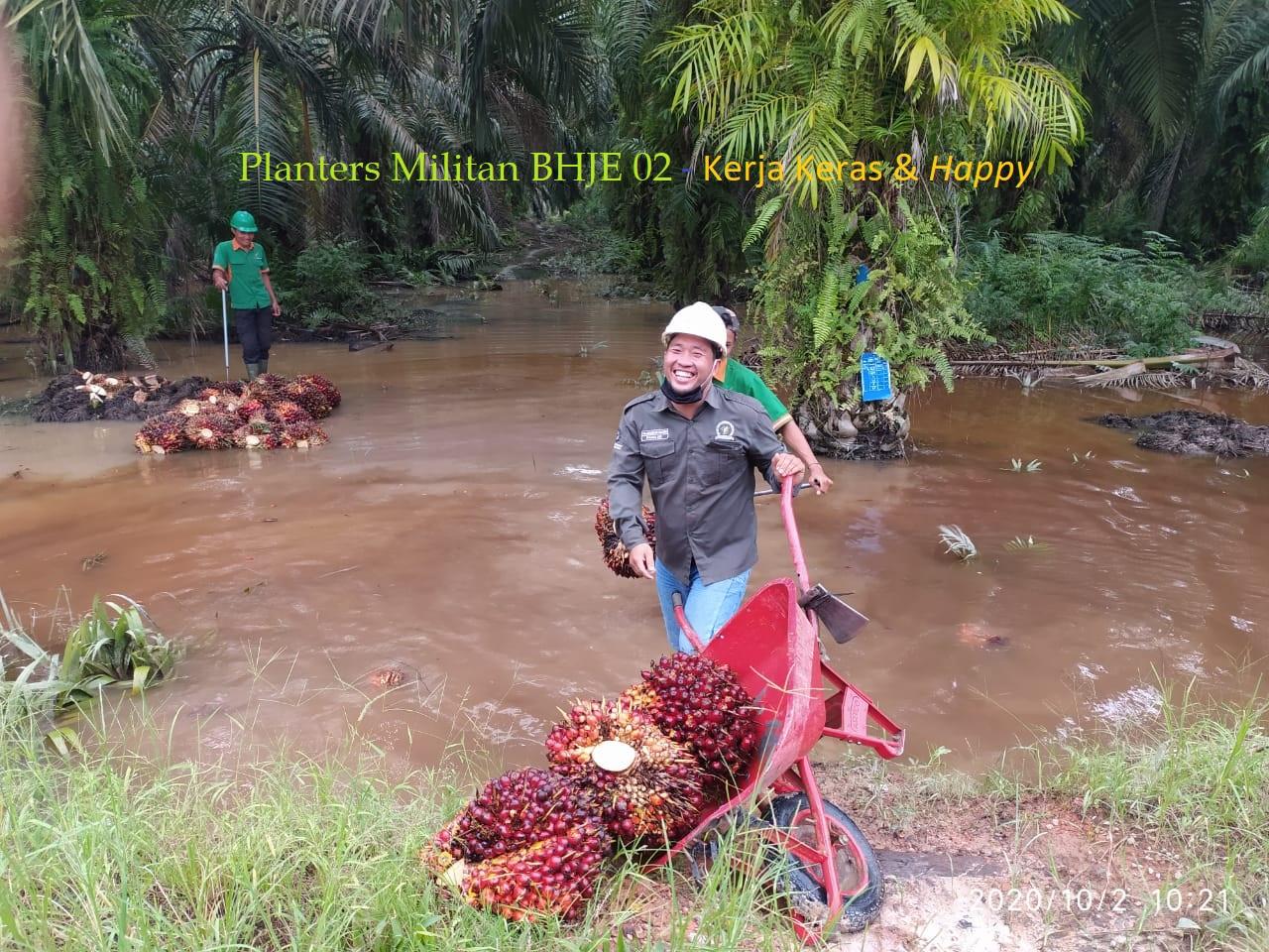 Planters Militan - Kerja Keras dan Happy, Bapak Hasan Basri Asisten BHJE 02