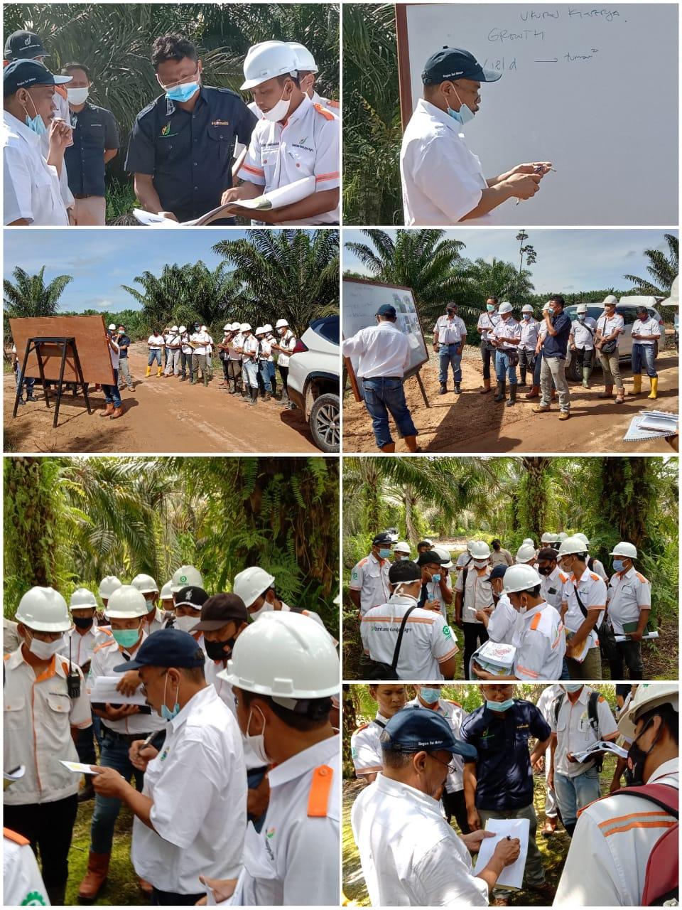Visit Pak COO ke Reg Kotawaringin Kebun SLNE, 16 Nopember 2020