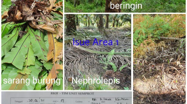 Issue Area 1 Regional Mentaya, Jawab ke Pak COO